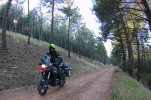 viniendo bosque